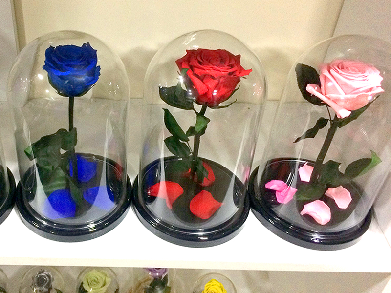 Long lasting rose 27 cm